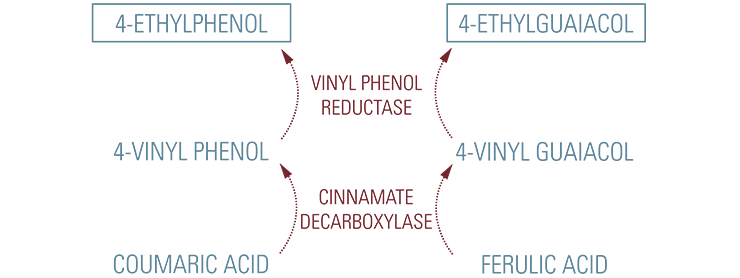 content_ethylphenolsynthesis_740