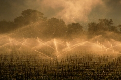 vinography_desktop_napa_frost_protection-thumb-600x399-1568
