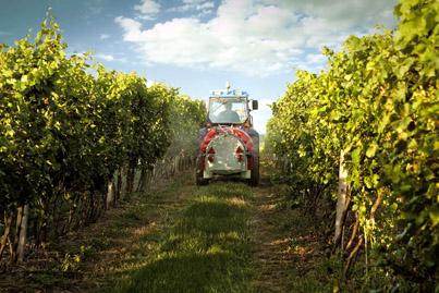 Napa-Vineyard-Farmers