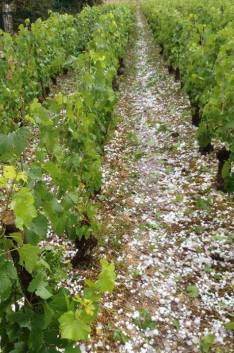 x0000087a1-Hail_in_Volnay_June_2014.jpg.pagespeed.ic.sJgnRxYX5T