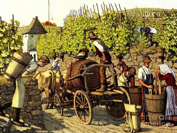 grape-harvest-1890-padre-art