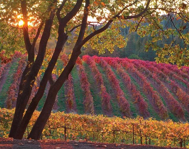 8039f99520d2c60ecea42ec9e9510745--fall-pics-wine-vineyards