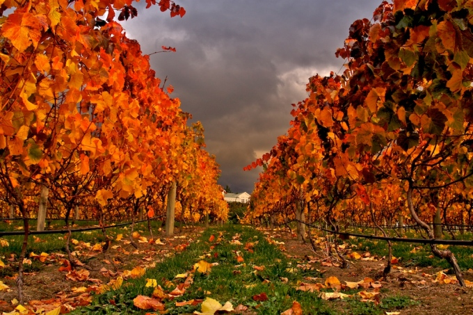 autumn-temperate-climate-zone-new-zealand
