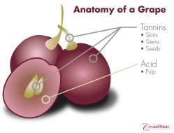 GrapesIllustration_Labels